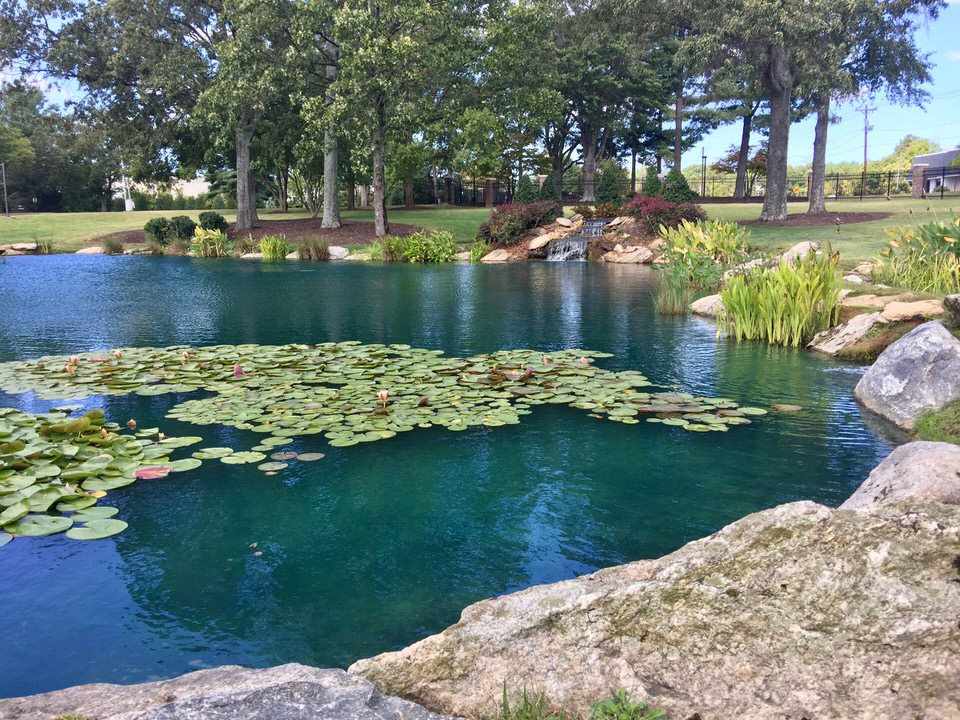 Pond Dye Is It Worth The Money Platinum Ponds Amp Lake