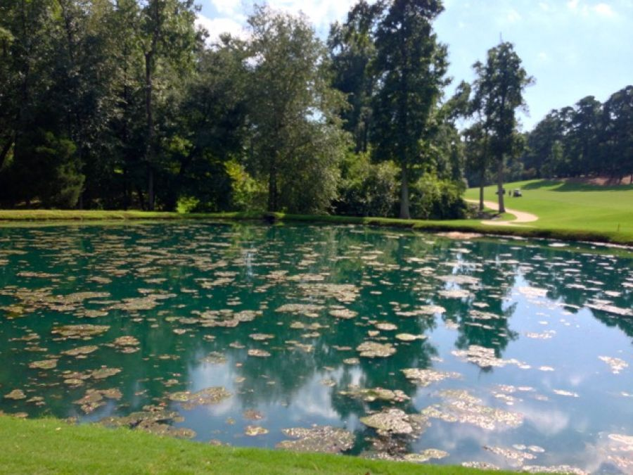 Frustrated with pond algae control platinum ponds for Farm pond maintenance