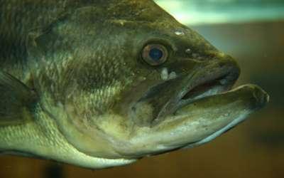 Blog Categories: Fish Stocking / Platinum Ponds & Lake Management